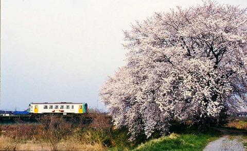 s-桜・・・(2)