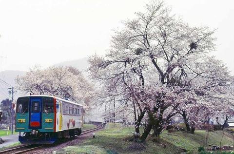 s-春、谷汲口、桜(2)
