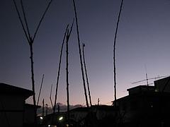 IMG_0083