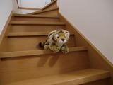 階段を駆け下りるとらちゃん