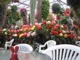 花鳥園 1