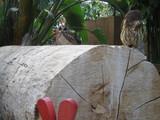 花鳥園 3