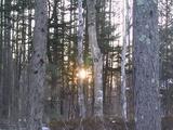 林に日の入り