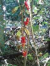 庭の赤い実