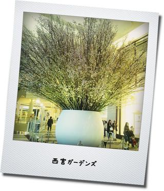 ガーデンズ 桜