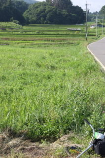 田舎の畑の草刈りに
