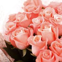 pink_rose_img_04