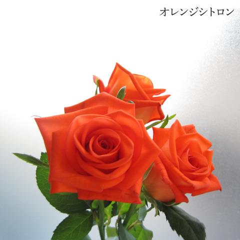 season_04