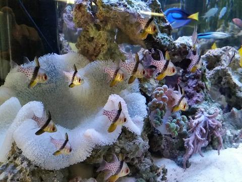 海水魚追加