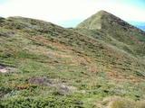 三角点のある本当の西朝日岳山頂(藪道)