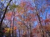 晩秋の八溝山