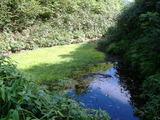 登山道を塞ぐ池
