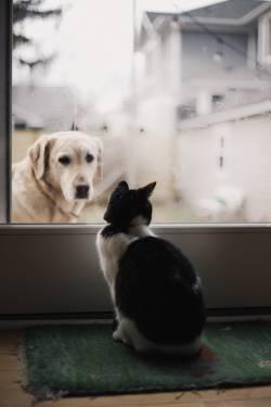 元野良猫のうちのにゃーんがクソかわな件(画像あり)