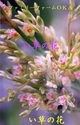 い草の花2