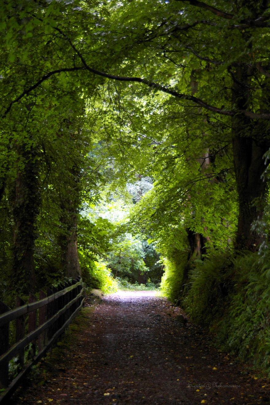 緑のトンネル雨やどり