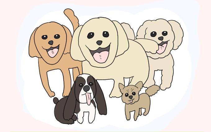 実家の犬たち