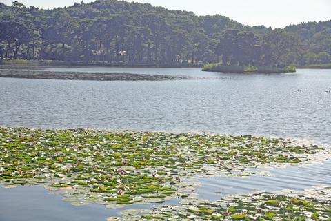 ショウゾウカフェ南湖
