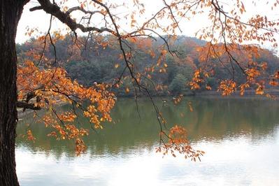 宝ヶ池 紅葉