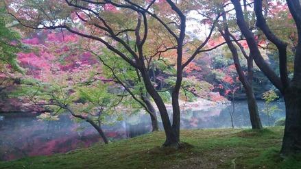 101114お浄土の植物園