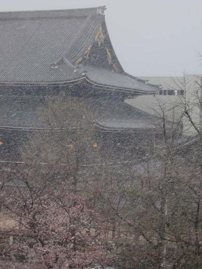 100329吹雪く東本願寺さん