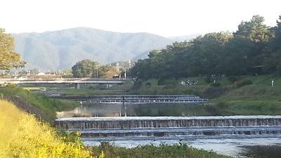 1-賀茂川ウォーク、秋のけわい