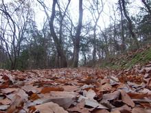 091231京都宝ヶ池、冬の山間遠路