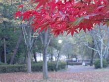 京都宝ヶ池 菖蒲園