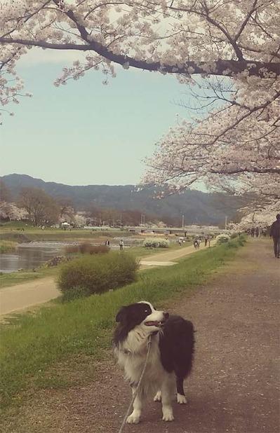6-ゴンタくんとお花見ウォーク (2)
