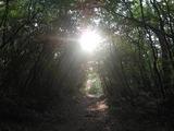 京都宝ヶ池、トトロの森?