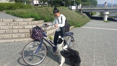 1-150712 賀茂川〜高野川ウォーク ゴンタ君の出会い