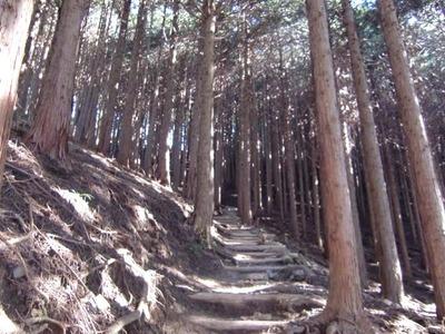 5.樹木の行の道