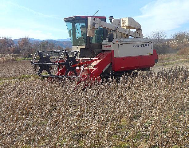 大豆畑-収穫