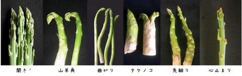 アスパラガス異常茎