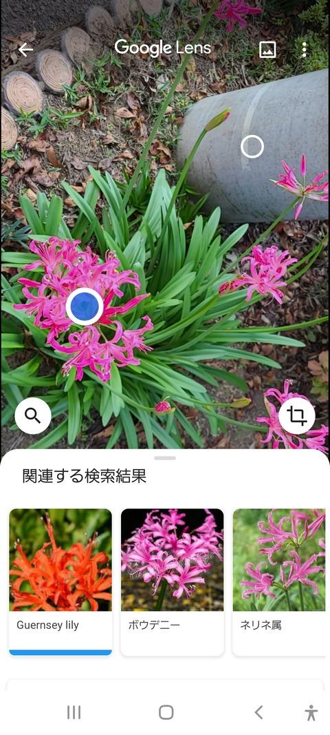 Screenshot_20201119-110141_Google
