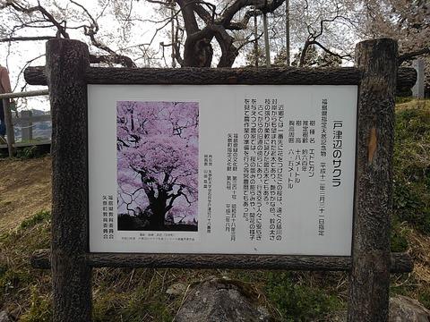 KIMG9610