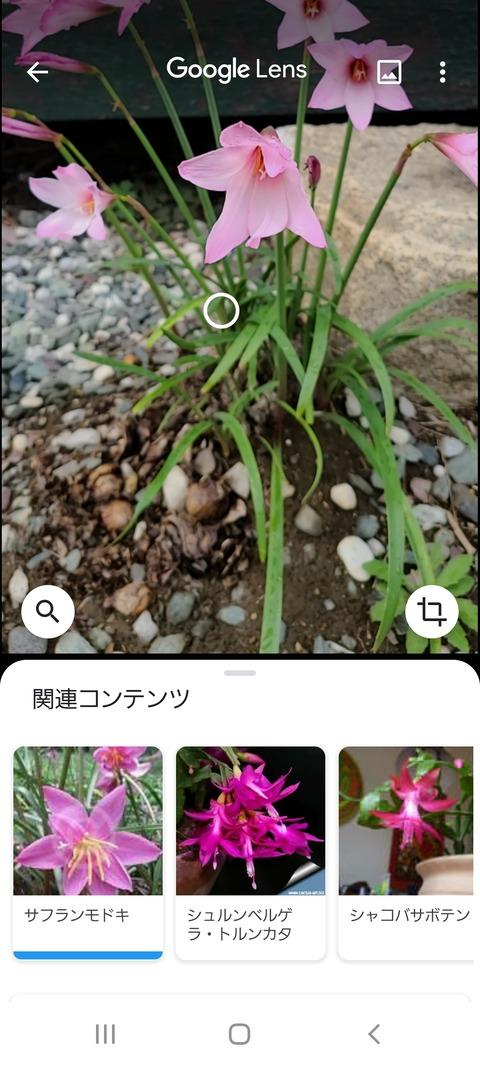 Screenshot_20200705-153805_Google