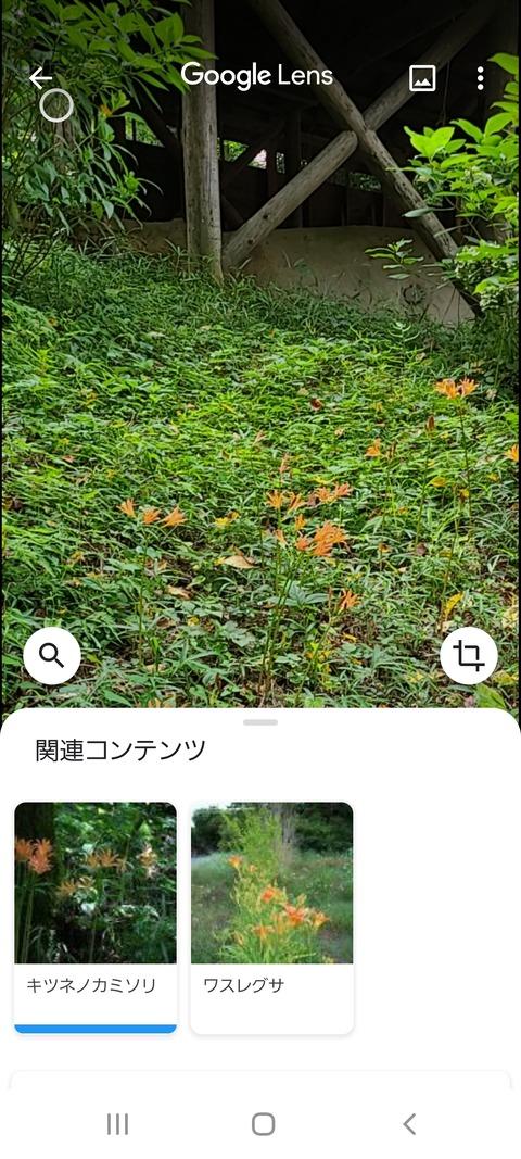 Screenshot_20200731-135615_Google
