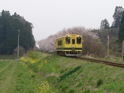 DSC_8703