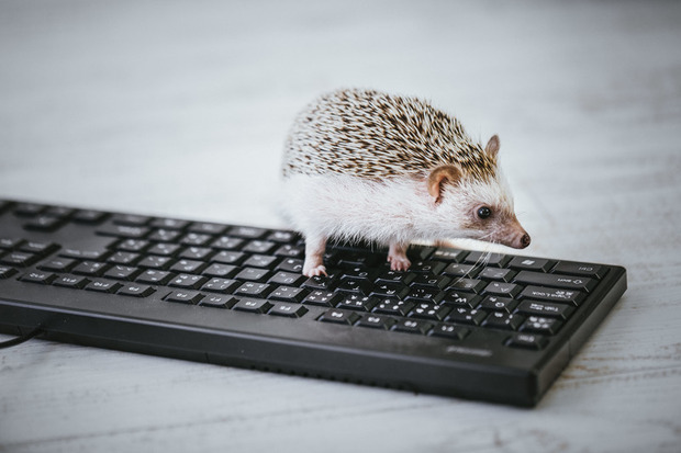 hedgehogIMGL8783_TP_V4