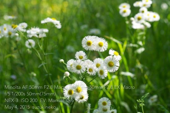 Ap3-20150504-_DSC0143-NEX3-08