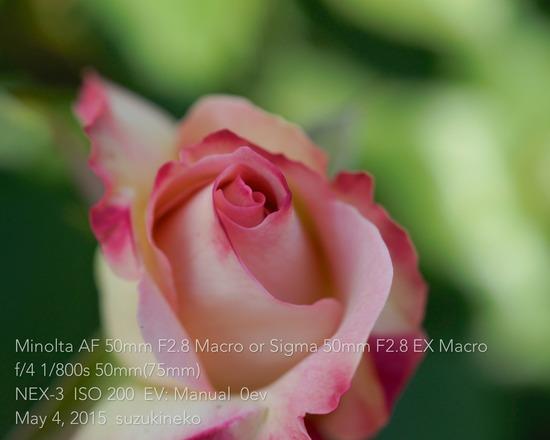 Ap3-20150504-_DSC0034-NEX3-05