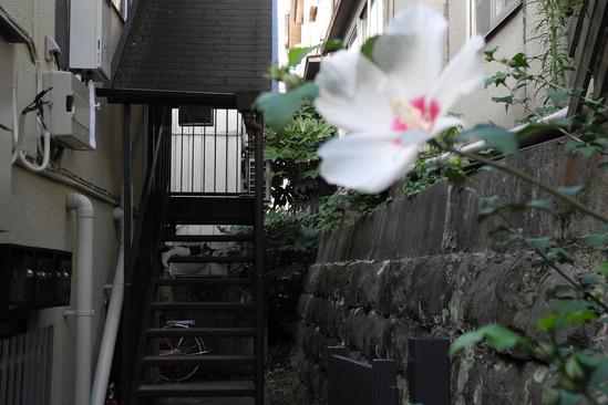 shinjuku-DSCN0434
