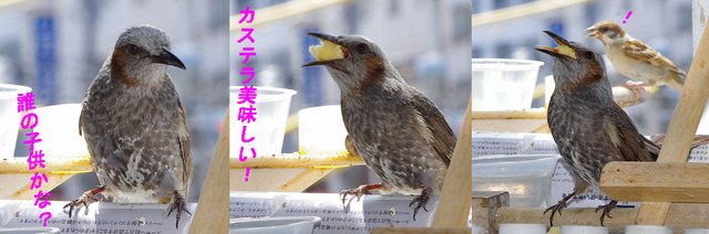 0623hiyoko01