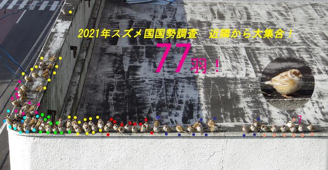 0102suzume77