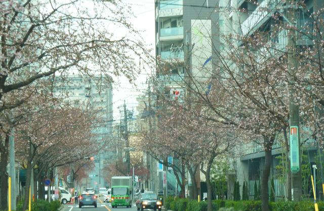0225hayazaki