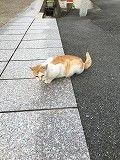 猫との遭遇
