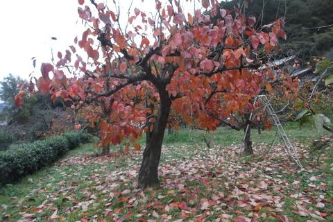 四つ溝の紅葉