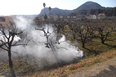 原の柿剪定枝焼却