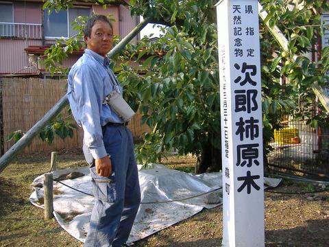 遠州森町次郎柿原木見学