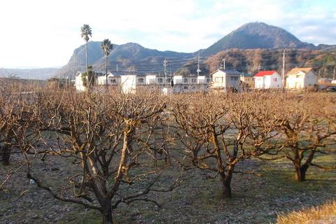12-27原の柿畑